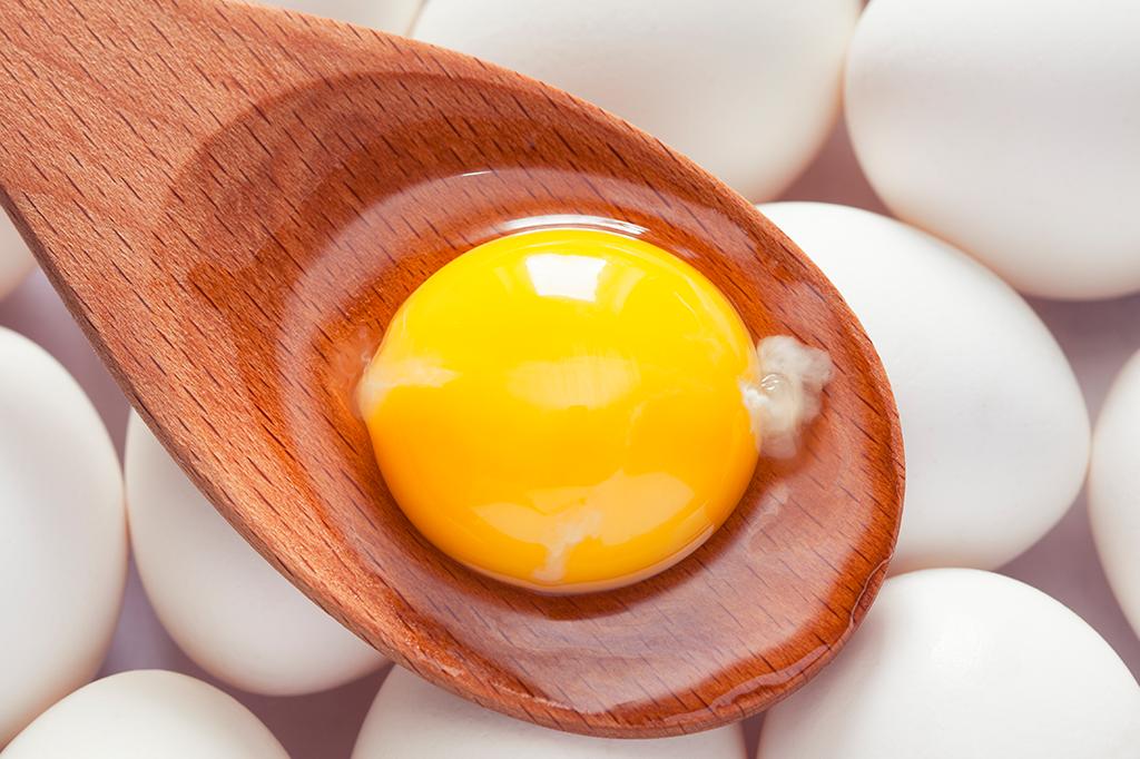O que é aquele negócio branco na gema do ovo - será que é o esperma do galo?